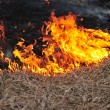Burning dry grass in the field — Stock Photo #4274830