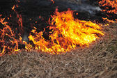 Burning dry grass in the field — Stock Photo