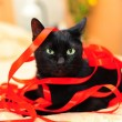 Royalty-Free Stock Photo: Black cat