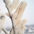 Branches  with ice — Stock Photo