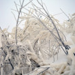 Branches with ice — Stock Photo #4459966