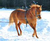 Horse running in winter — Stock Photo
