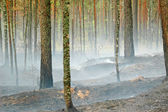 Smoke and fire in the wood — Stock Photo