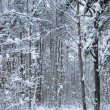 Woodland snow scene — Stock Photo
