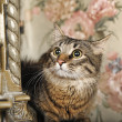 Young Maine Coon cat - Stock Photo