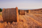 Golden hay bales in the countryside — Stock Photo