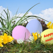 Easter eggs on grass field with blue sky background — Stock Photo