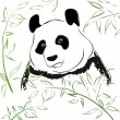 Panda bear. Vector Illustration — Stock Vector