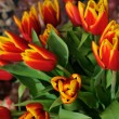 Beautiful bouquet from red tulips closeup — Stock Photo #5241027