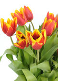 Beautiful bouquet from red tulips closeup — Stock Photo