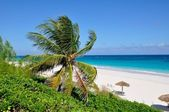 Caribean beach — Stock Photo
