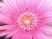 Daisy blur — Stock Photo