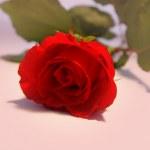 Romance — Fotografia Stock  #4393839