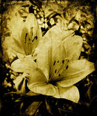 Grunge lillies — Stock Photo