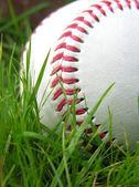 High contrast baseball in long grass — Stock Photo
