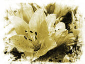 Background of lillies on grunge — Stock Photo