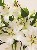 Lillies blanc — Photo