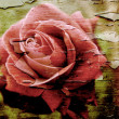 Grunge rose — Stock Photo