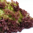 Curly lettuce — Foto de Stock