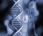 Skeleton with DNA strands — Stock Photo