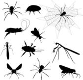 Creepy crawlies — Stock Photo