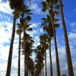 Stock Photo: Palms and blue sky