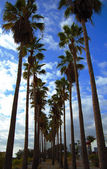 Palms and blue sky — Stock Photo