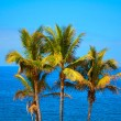 Palms and blue sea — Stock Photo