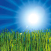 Grass and sunny sky — Stock Vector