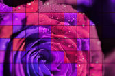 Rose mosaic — Stock Photo