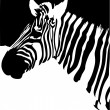 Zebra. Black and white - Stock Vector