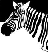 Zebra. Black and white — Stock Vector