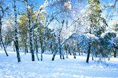 Een weergave op een besneeuwde forest — Stockfoto