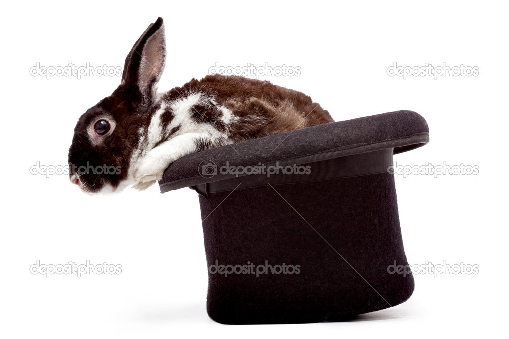 Cute dappled rabbit sitting in a black magician's hat — Stock Photo #4444948