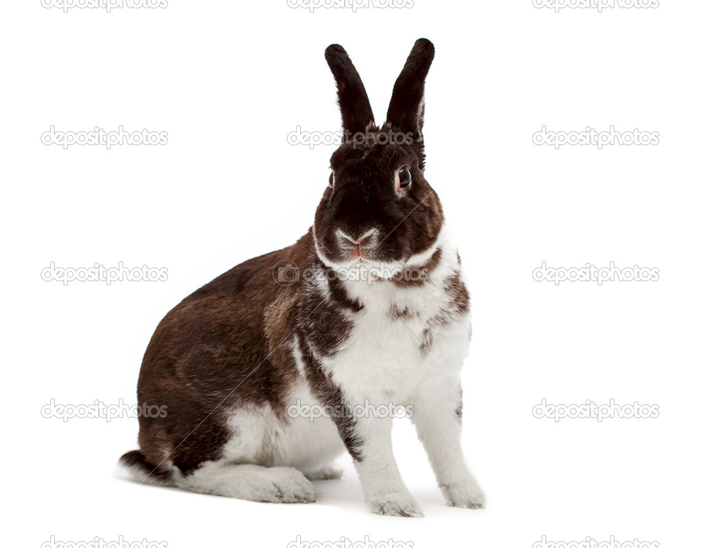 Rabbit looking at camera — Stock Photo #4444950