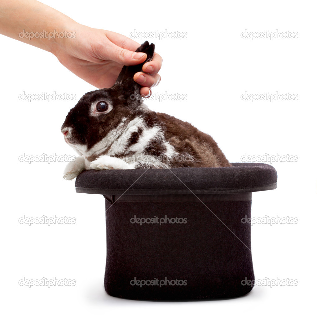 A human hand pulling cute rabbit out of the black magician's hat — Foto de Stock   #4444979