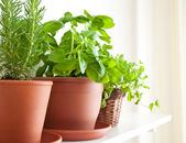Rosemary, Basil and Mint in Pots — Stock Photo
