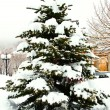Snow-covered fur-tree — Stock Photo #5184919