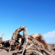 Dead trees in the desert - Stock Photo
