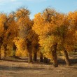 Golden trees in autumn - Stock Photo