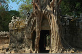 Angkor Cambodia — Photo