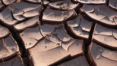 Dried and cracked earth — Stock Photo