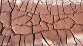 Dried and cracked earth — Stockfoto