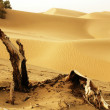 Landscape of deserts — Stock Photo