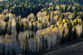 Golden forest in autumn — Stock Photo