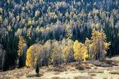 Landscape in autumn — Stock Photo