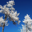 Rime in winter - Stockfoto