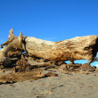 Dead tree in the desert — Stock Photo
