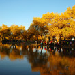 Foto Stock: Scenery in autumn