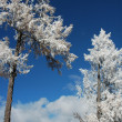 Landscape in winter — Stockfoto #5031694